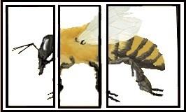 ape-in-sezione